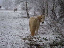 neige à la campagne