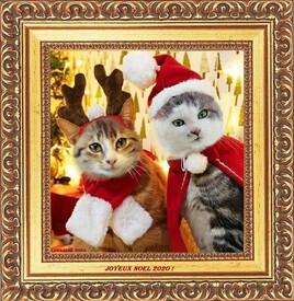 Grisou et Mioumiou vous souhaitent un joyeux Noel 2020 !