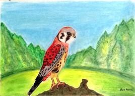 Horus le faucon