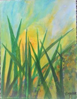 au delà des herbes... le soleil