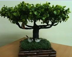 arbre taillé