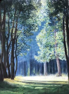 Clair matin en forêt