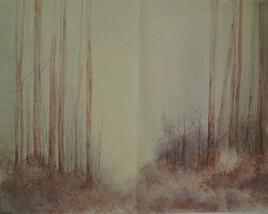 Forêt 12