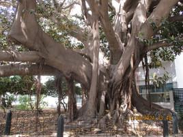 L'arbre majestueux.