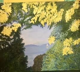 Les mimosas