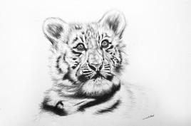 Dessin de tigreau