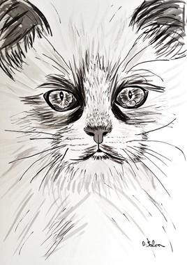 Portrait du chat
