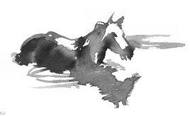 reflet de cheval dans l'eau