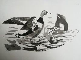 Canard dans l'eau à l'encre de Chine.