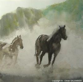 Chevaux dans la poussière
