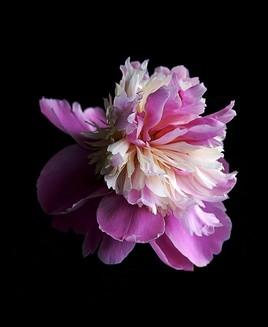 Photo jupon rose...