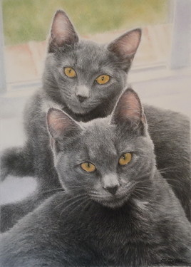 """Chats Chartreux"""