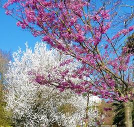 ça sent bon le printemps ! :)