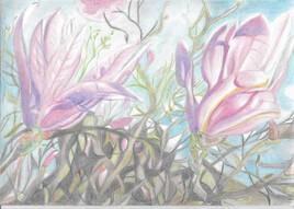 Fleurs de magnolia sous la lune rose