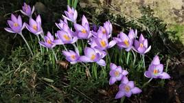Le printemps arrive ...