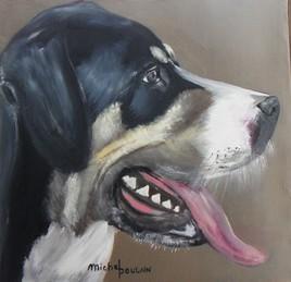 chien bouvier grand suisse