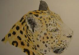 leopard vu à Pairi Daiza