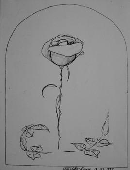 Rose médiévale