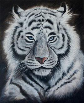 Face au tigre blanc