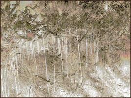 Le monde de la forêt N°3