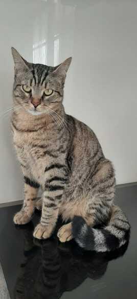 Le chat Tigrou