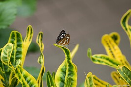 Butterfly nature photography - IMG - 0372