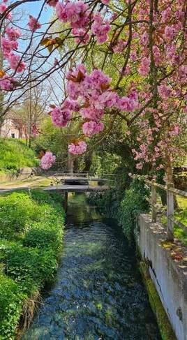 Petit ruisseau