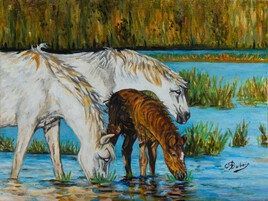 Camargue horses  Claude Dubois的CAMARGUE油馬