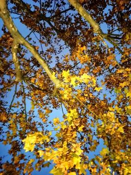 Des feuilles d'or