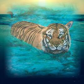 Tigre a l'eau.  Revue